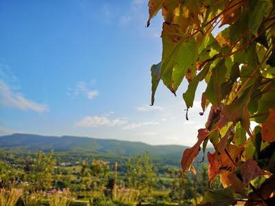 vignes rouges automne